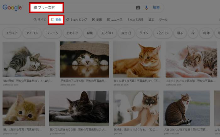 猫 フリー素材